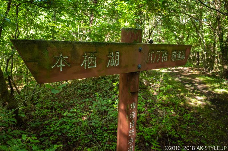 本栖湖の遊歩道