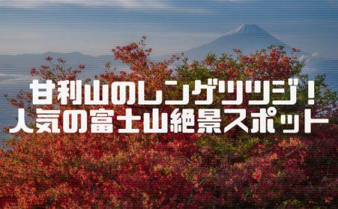 甘利山のレンゲツツジと富士山