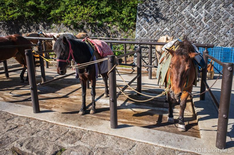 富士山スバルライン5合目の馬
