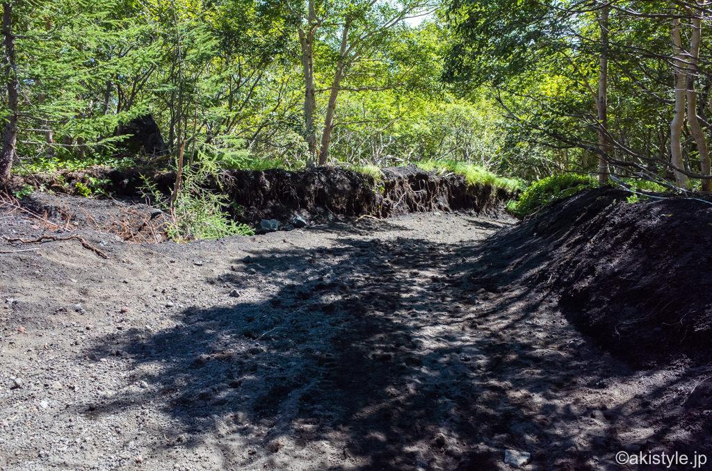 須走ルートの樹林帯