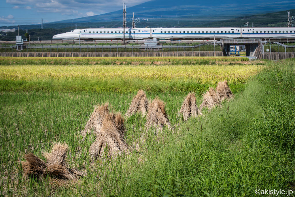 稲穂と新幹線
