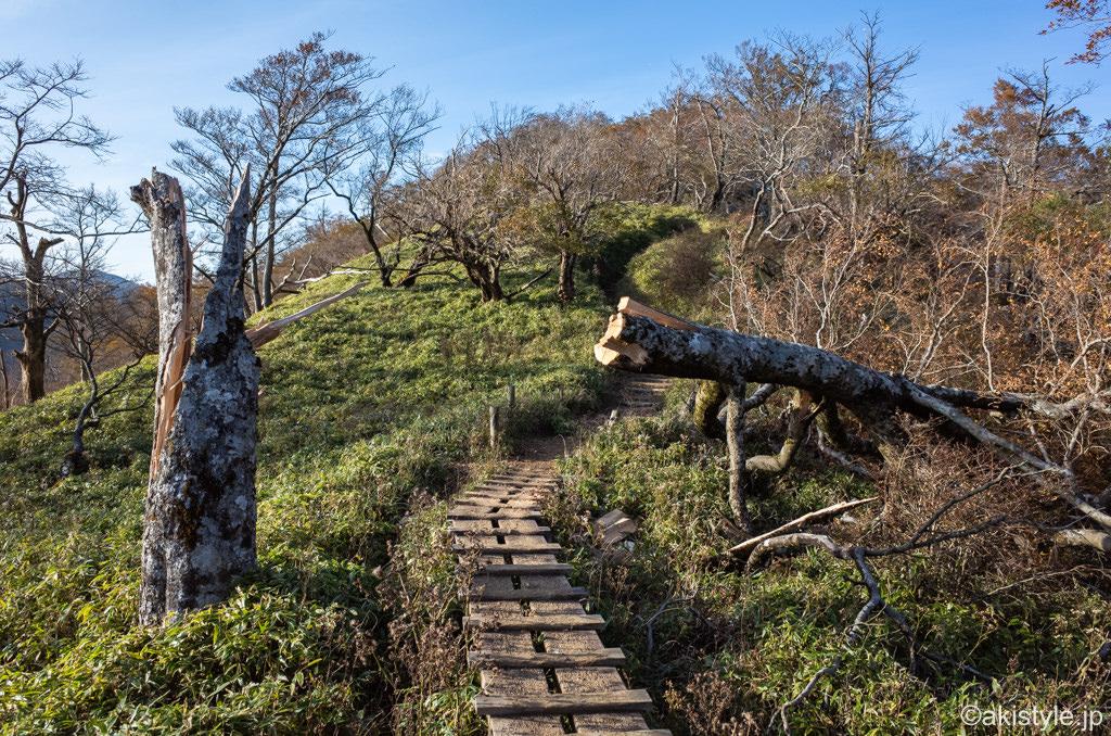 丹沢山への稜線