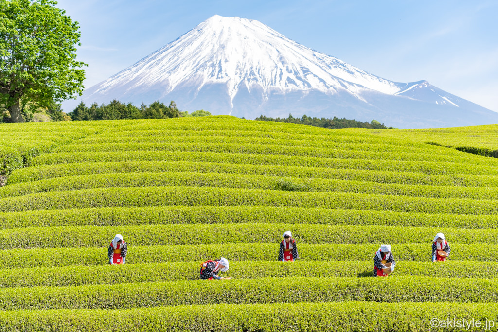 富士山と茶娘
