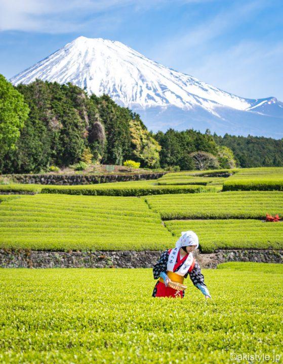 茶娘と富士山