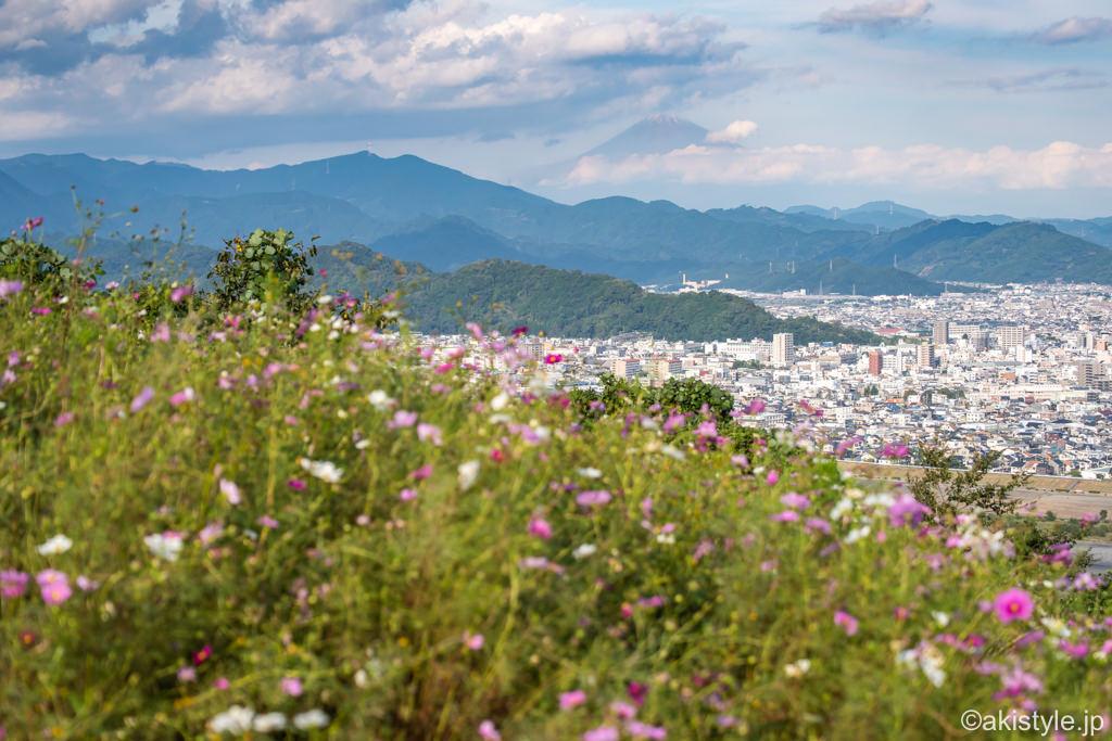 コスモスと富士山
