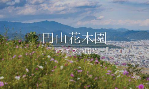 円山花木園とコスモス