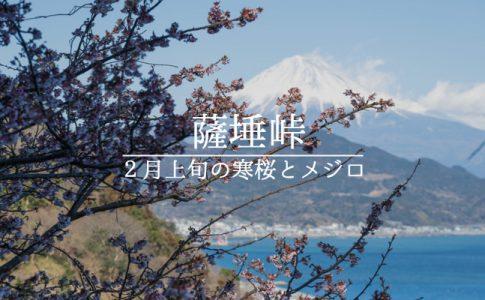 薩埵峠と寒桜