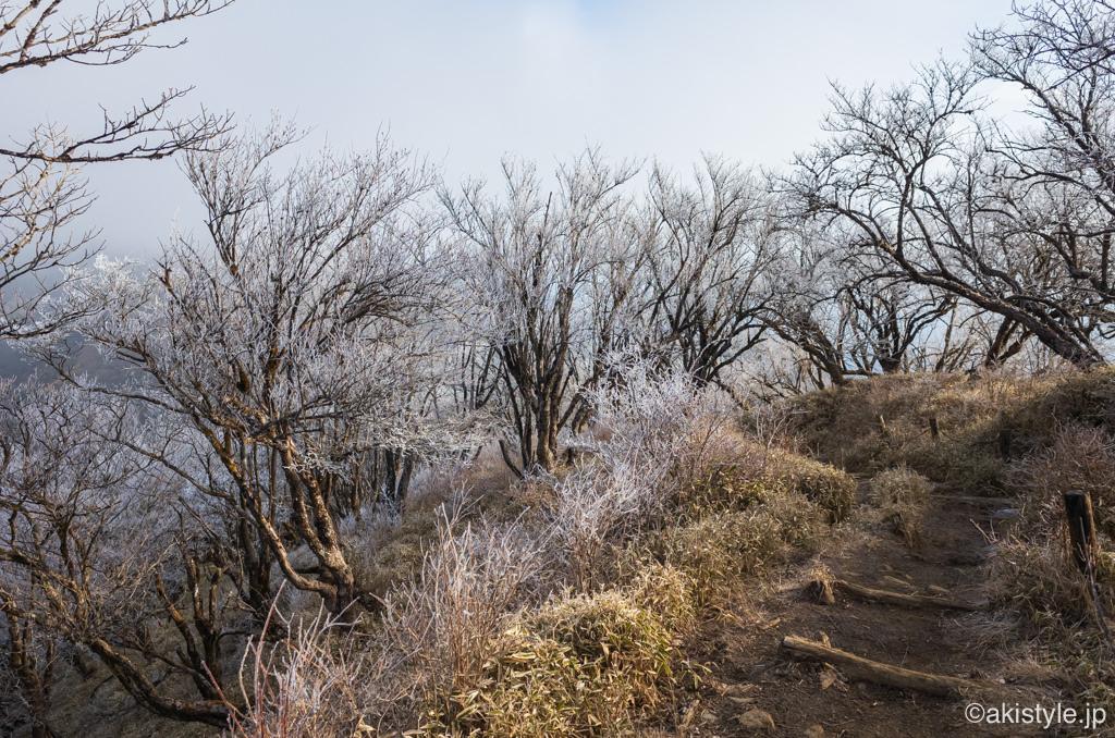 丹沢の霧氷