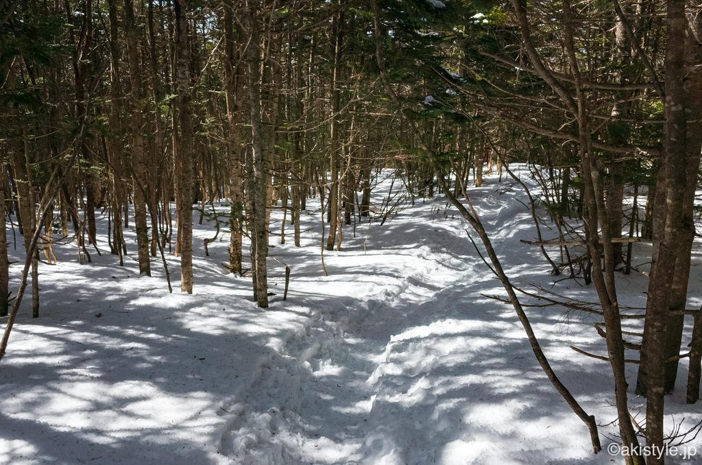 黒斑山中コースの樹林帯
