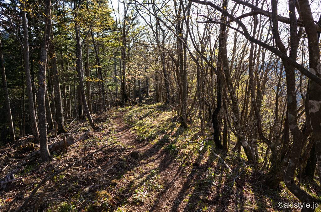 朝日の差し込む樹林帯